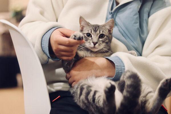 katt hos dyreklinikk