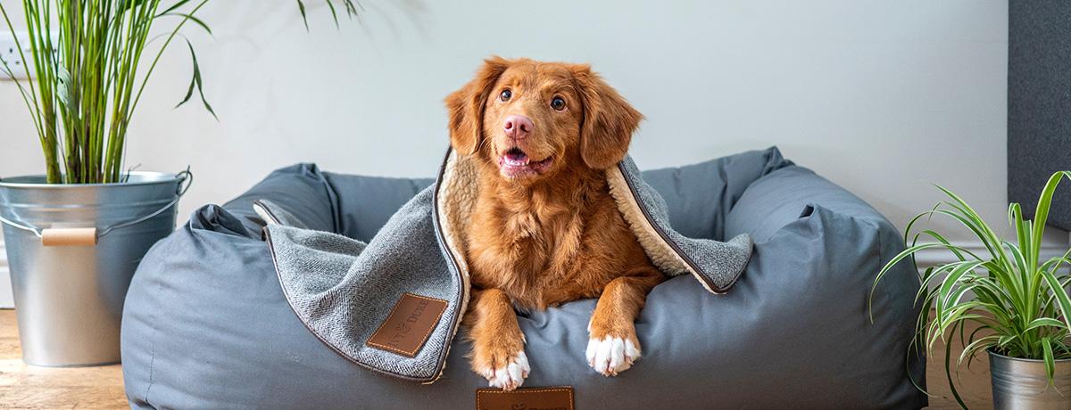 Hund på sofa